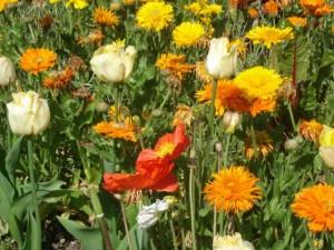 2011 Blumenriviera